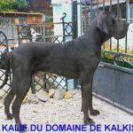 View CH. Kalif du Domaine de Kalkis